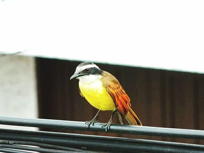 Bird Perching