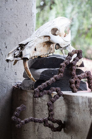 scull Animal Animal Body Part Animal Bone Animal Skull Animal Themes Bike Chain Bone  Chain Close-up Day Focus On Foreground Metal No People Old Outdoors Rusty Skull Teeth Tooth Weathered