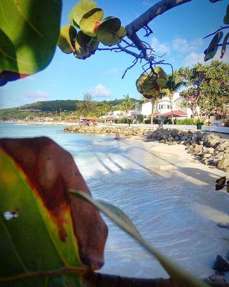 Beach Travel Bahamas Island Ocean Ship Life New Land Water Day Beach Nature Tree Sky