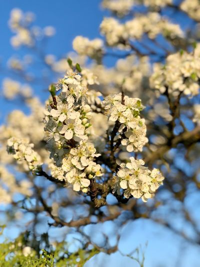 Spring Plant Focus On Foreground Flower Tree Fragility Growth Vulnerability  Beauty In Nature No People Nature Close-up Day Freshness Springtime