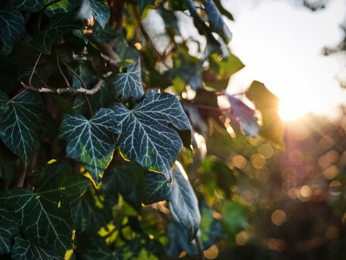 Forest Sunset Leaf Tree Nature No People Outdoors Growth Branch Sunlight Beauty In Nature Close-up Freshness