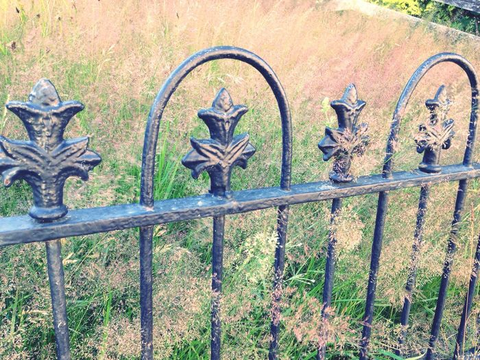 Grass Ironwork  Iron Fence Old Fence Traditional Fence Field Field And Fence Smooth Grass Long Grass Behind The Fence Sea Of Grass