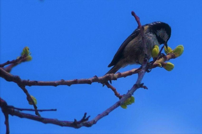 Animal Themes Animal Wildlife Animals In The Wild Bird Blue Branch Clear Sky No People One Animal Plant Sky Vertebrate