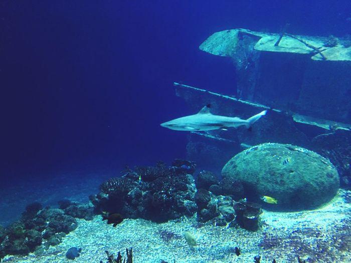 Underwater UnderSea Sea Life Fish Water Animals In The Wild
