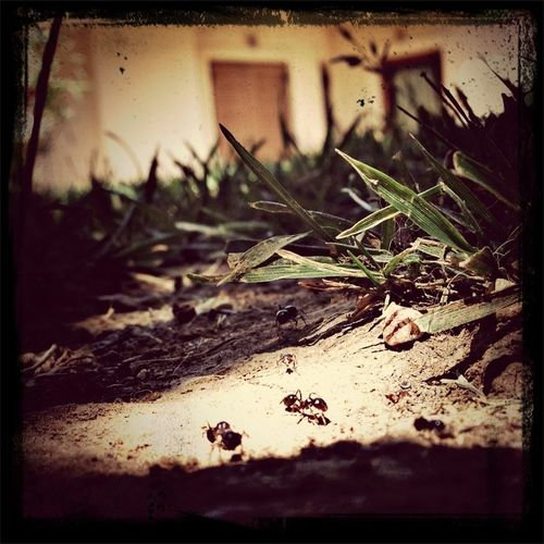 Nature Ants Close Up