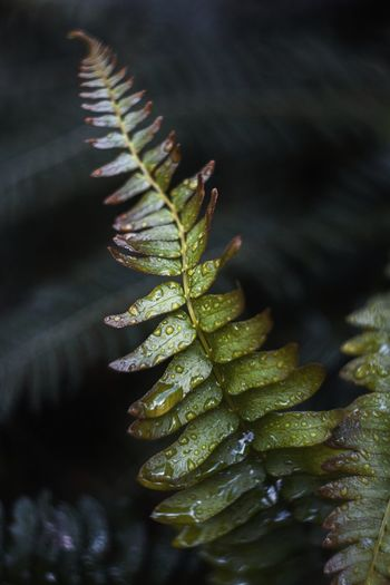 Close-up of a fern plant with leaves in water