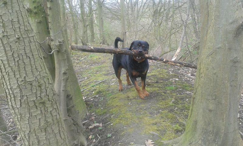 Urban Spring Fever Mit Meinem Hund freya Unterwegsunddraußen In Germany Dogs Of EyeEm Hunderunde EyeEm Dog Lover Dogsofeyeem Things I Like