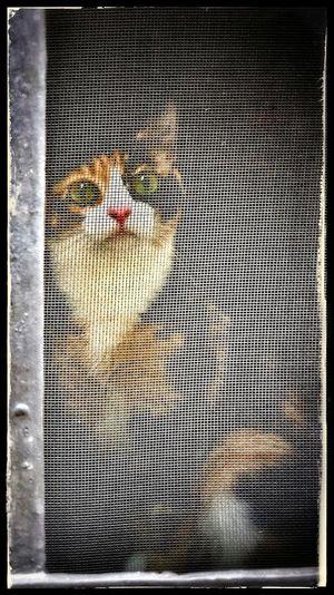 Pet Photography  EyeEmBestPics EyeEm Best Shots EyeEm Selects Pets Of Eyeem Cat Photography Catsoftheworld Cats Of EyeEm Cat♡ Cat Catlovers Catsoneyeem Lovemycat Gatos En La Ventana Gatto Katzen Katzenfoto Feline