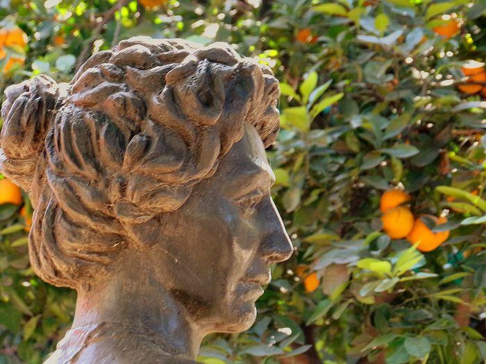 Escultura. Busto Lola Mora. Tucuman. Naranjas de fondo. Escultura Lola Mora Argentina