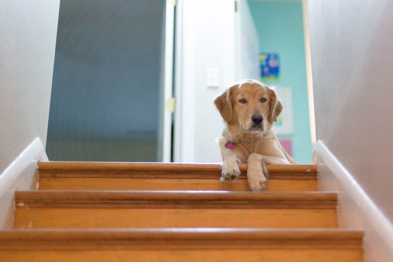 Dog on staircase