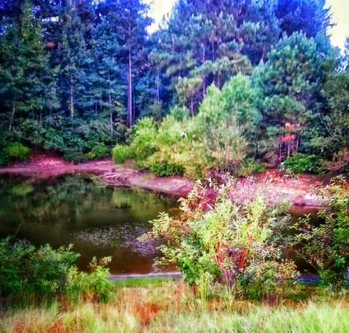 Nature Photography Outdoor Photography Ponds Woods Pasture Spring Time Green Grass Landscape_photography Water Reflections Water Tree Reflections Tree Photography Water Shurbs