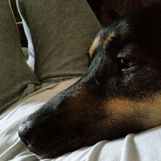 Dave and I having a cuddle. Germanshepherd Germanshepherdlovers Dogswithhumannames Dogsofinstagram