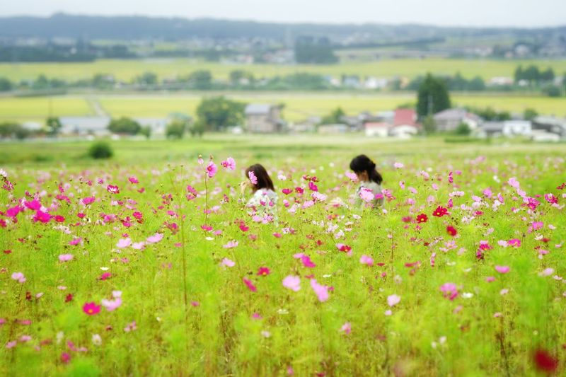 Capture The Moment Depth Of Field Cosmos Flower Field Rural Scene Nature Two People People Snapshots Of Life Uzu St. Outdoors Fine Art Photography Getting Inspired Beauty In Nature Vacations Tranquility Scenics Landscape Full Frame Detail Sony A7RII Sigma EyeEm Best Shots 17_10 Lost In The Landscape Connected By Travel EyeEmNewHere