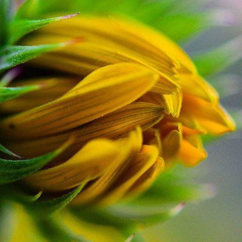 Hello Bud Macro Mode : ON Nikon D7200 Nikonphotography Indiaphotography India Photography Iamexclusive Iamnikon Iamshutterbug Nikkor 105mm Closeup Flower