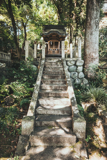 Walking into a shrine Classic Japan Japanese  Shrine Travel Architecture Belief Building Exterior Built Structure Culture Old Religion Summer Tour Traditional Truck Woods 日本 犬山 神社