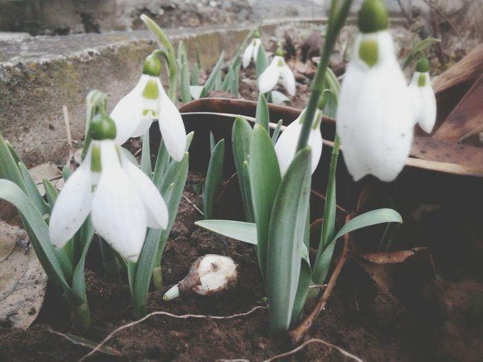 Flower Garden Spring?