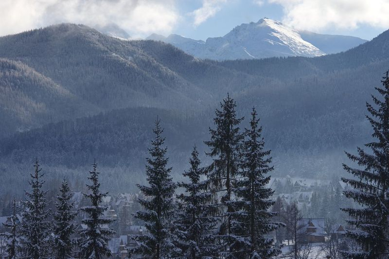 Zakopane Poland Mountains And Sky Tatry Mountain Snow Tree Plant Cold Temperature Beauty In Nature Winter Scenics - Nature Tranquility Tranquil Scene Nature Non-urban Scene Cloud - Sky Sky Pine Tree Growth Snowcapped Mountain No People Coniferous Tree Mountain Range