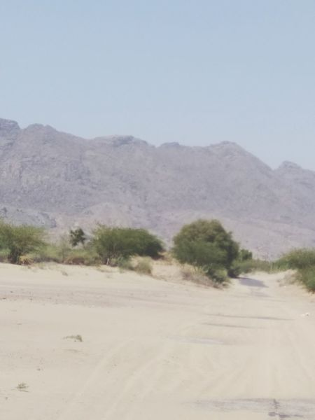 Desert Mountain Nature Day Outdoors Road Tree Clear Sky Sky Marwad Rajsthan India Summertime Dry Arid Climate Landscape Sand Scenics No People Sand Dune Grass