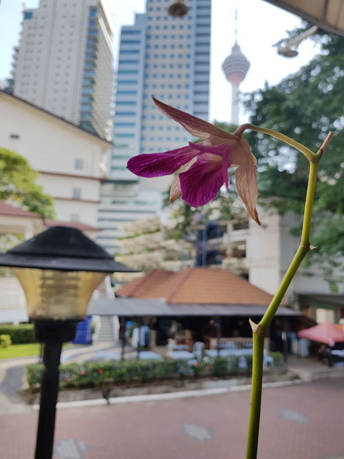 EyeEmNewHere Architecture Built Structure Building Exterior City Day Motion Outdoors Skyscraper No People Flying Spread Wings Tree Nature Flower Wither Hot Temprature Malaysia Kuala Lumpur Kuala Lumpur Malaysia  Kuala Lumpur Tower The Week On EyeEm