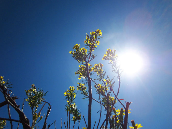 Low Angle View Of Flowers Growing Against Sky On Sunny Day