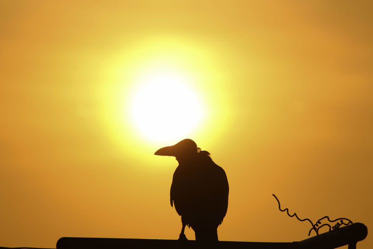 Taken by Canon 1200D. Sunset time vizag city of destiny No People Outdoors Photography Photooftheday Sunset Crow Travel Photography Nature Sky Beautyinnature  Beauty Of Nature