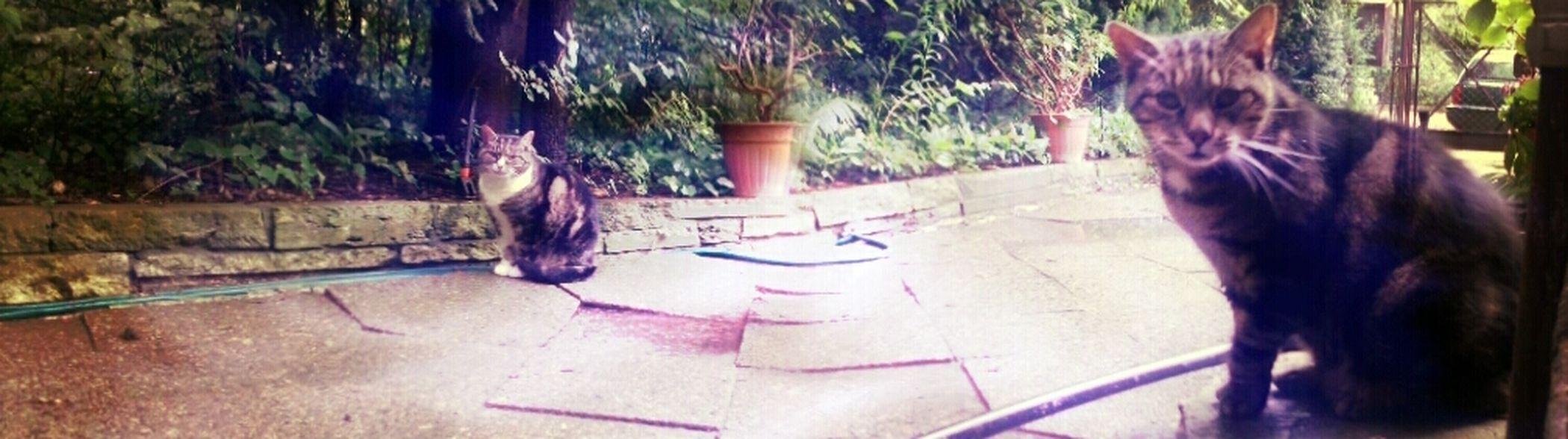 Cats Of EyeEm Aristocats Streetphotography Catsoneyeem