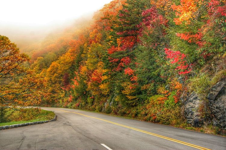 Fall Beauty Blue Ridge Mountains Blue Ridge Parkway North Carolina Fall Fall Colors Leaves Photos That Will Restore Your Faith In Humanity