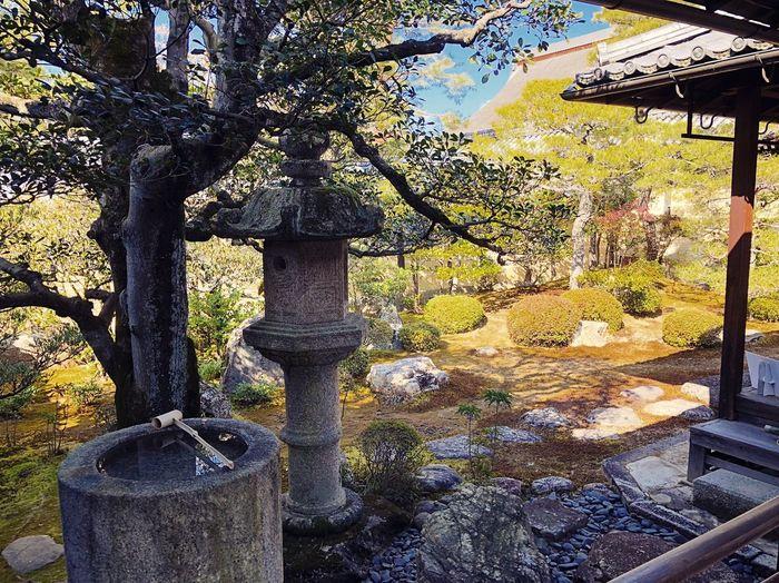 東海庵 妙心寺 Kyoto,japan Travel Destinations Tranquility Tranquil Scene Japanese Garden Japan Photography Day No People Sunlight Outdoors Tree Nature Close-up