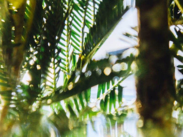 Plant Tree Growth Green Color Leaf No People Day Nature Plant Part Beauty In Nature Selective Focus Palm Tree Close-up Sunlight Focus On Foreground Tropical Climate Outdoors Tranquility Leaves Palm Leaf Bamboo - Plant
