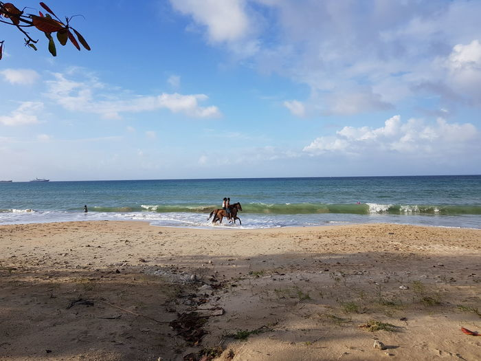 Horse Water Sea