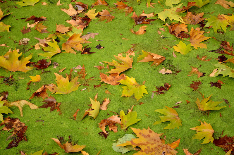 Autumn Beauty In Nature Change Charca Fallen Fallen Leaf Feuilles Fragility Green Color Hojarasca Hojas Caidas Hojas Secas Laub Leaf Leaves Natural Condition Nature Season  Tranquility Verde Yellow листья 葉 葉子 잎
