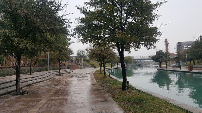 """Paseo Santa Lucía '' Monterrey Tree Day Nature"