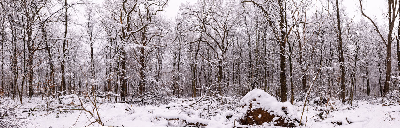 Snow Cold Temperature Winter Tree Land Plant Tranquility Bare Tree Forest Nature Beauty In Nature No People Tranquil Scene Scenics - Nature Covering White Color Day Tree Trunk Non-urban Scene Snowing