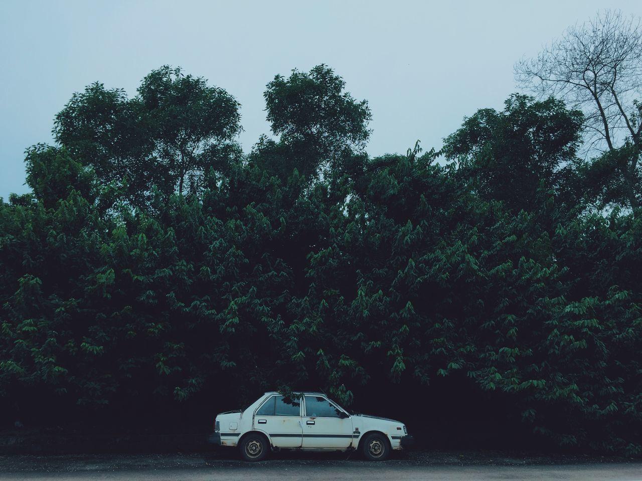 Car on street against trees