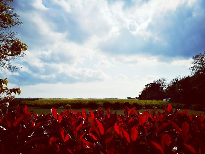 Flower Nature Red Cloud - Sky Field Growth Beauty In Nature Tranquility Plant Sky Agriculture Outdoors Day Abundance Rural Scene Scenics Fragility No People Landscape The Great Outdoors - 2017 EyeEm Awards