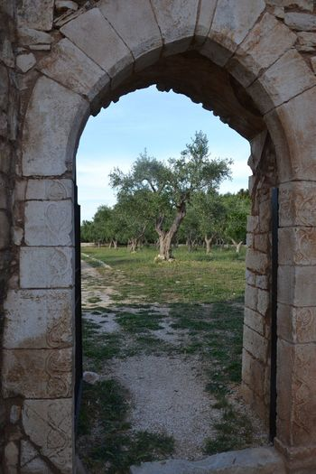 Tree Architecture Plant Built Structure Arch Sky Nature No People The Past Grass Outdoors History Travel Destinations Old Old Ruin Wall Tourism Ancient Building Exterior Day