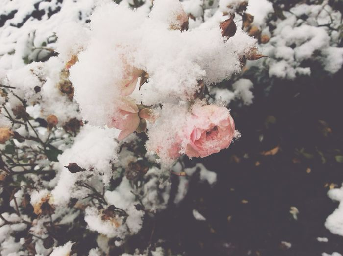 WinterIs Coming