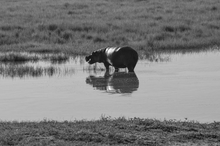 Horse drinking water in a lake