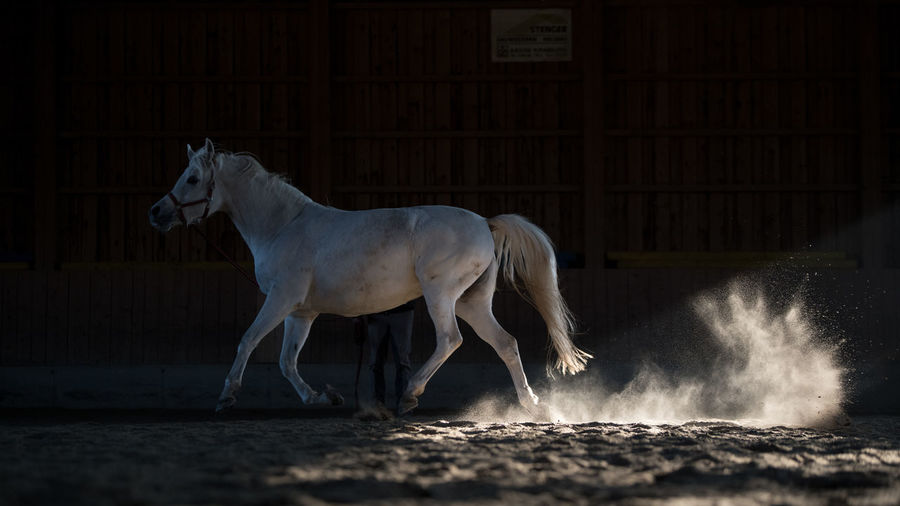 Arabian Animal Themes Day Domestic Animals Equine Equine Photography Full Length Horse Mammal Motion Nature No People Outdoors Side View Water