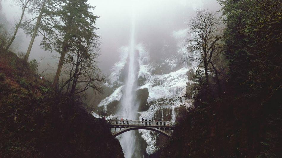Oregon Stormy Day Nature Walk