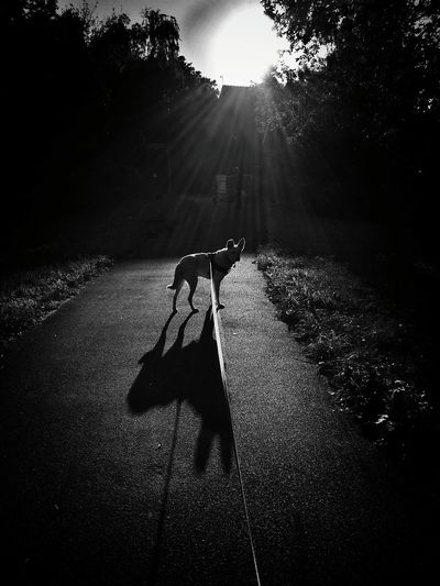 Wolve on the Leash Dogs My Dogs Are Cooler Than Your Kids Blackandwhite EyeEm Best Shots AntiM Dog Love Dog B&w Street Photography