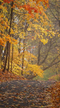 Autumn forest path Autumn Beauty In Nature Branch Change Close-up Day Forest Growth Landscape Leaf Leaves Maple Maple Leaf Maple Tree Nature No People Orange Color Outdoors Scenics Tranquil Scene Tranquility Tree Tree Trunk Yellow