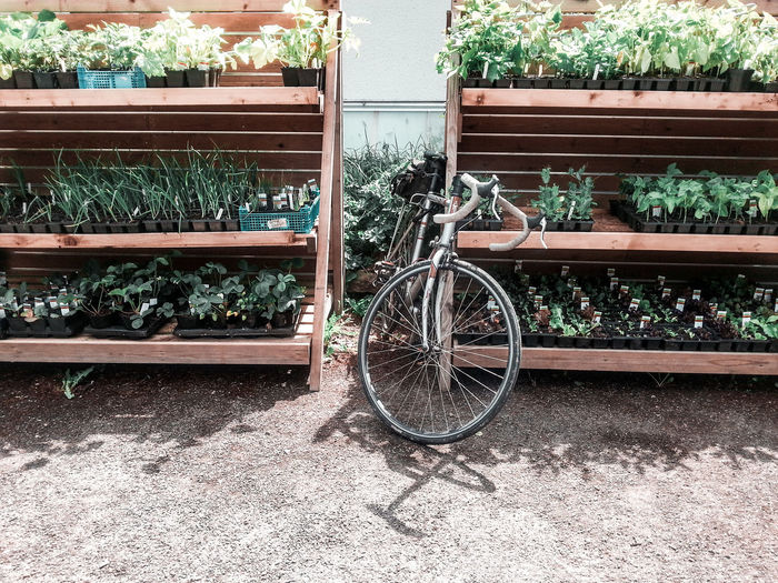 a bike and shelves of plants for sale Plant Nursery Retail Display Shelves Garden Centre Garden Center For Sale Rural Scene Countryside Britain Wales UK Sale Display Young Plants Gardening Sunny Springtime Rusty Parking Bicycle Bicycle Rack Cycling Stationary Blooming Growing Plant Life Locked