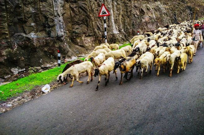 The Mix Up 43 Golden Moments Sheeps Sheepworld Sheep@Work Sheep Traffic Jam Sheep N Man Showcase July On The Move