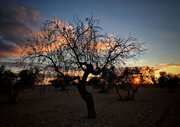 Sunset Tree Bare Tree Sky Sunset Branch Silhouette Tranquility Nature Beauty In Nature Lone Tranquil Scene Outdoors Landscape Scenics No People Tree Trunk Day