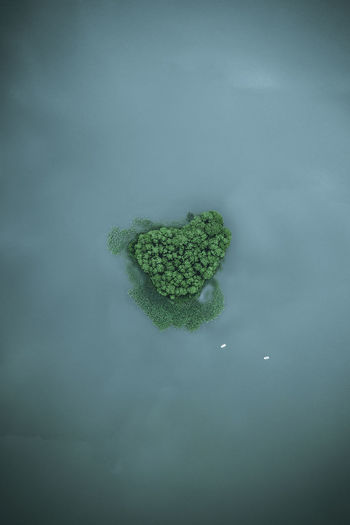 Aerial view of trees in sea