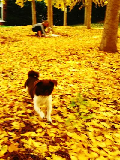 Dog running autumn day