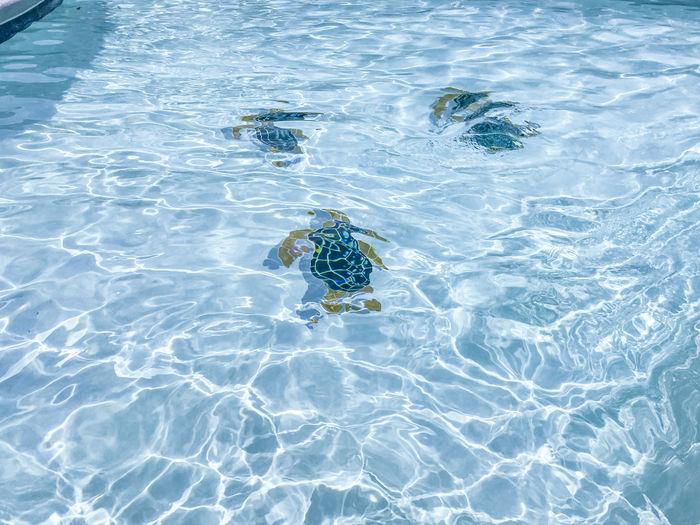 Ripple pool