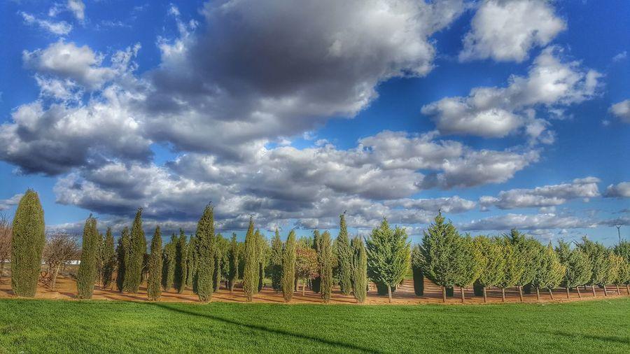 Cipreses Campo Dia De Relax