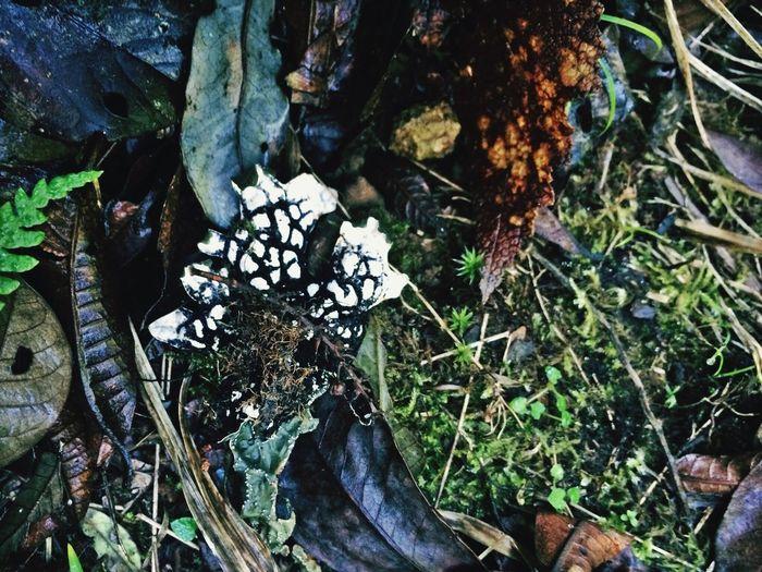 Litter Growth Plant Leaf Nature High Angle View Close-up Fungus Fragility Botany Day Growing Beauty In Nature Green Uncultivated Plant Life Forest Floor Mt. Data Philippines Non-urban Scene Mossy Forest Maximum Closeness